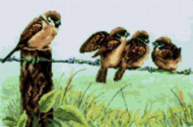 Воробушки, птицы, птички