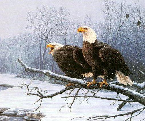 Два орла в зимнем лесу,