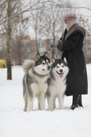 Зимняя прогулка с собаками,