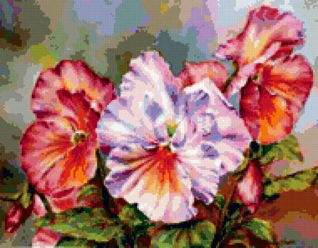 Виолы скромныные цветы