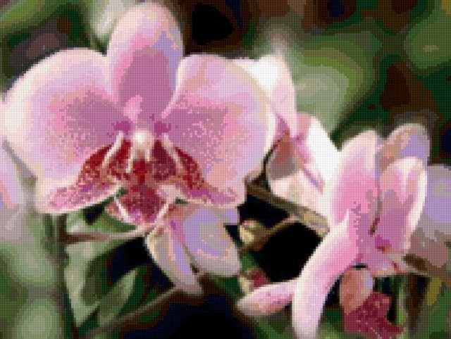 Розовая орхидея, предпросмотр