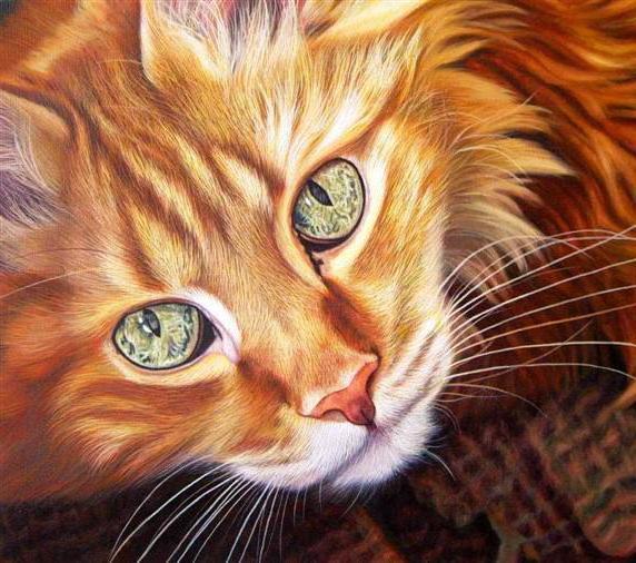 Портрет рыжего кота, оригинал