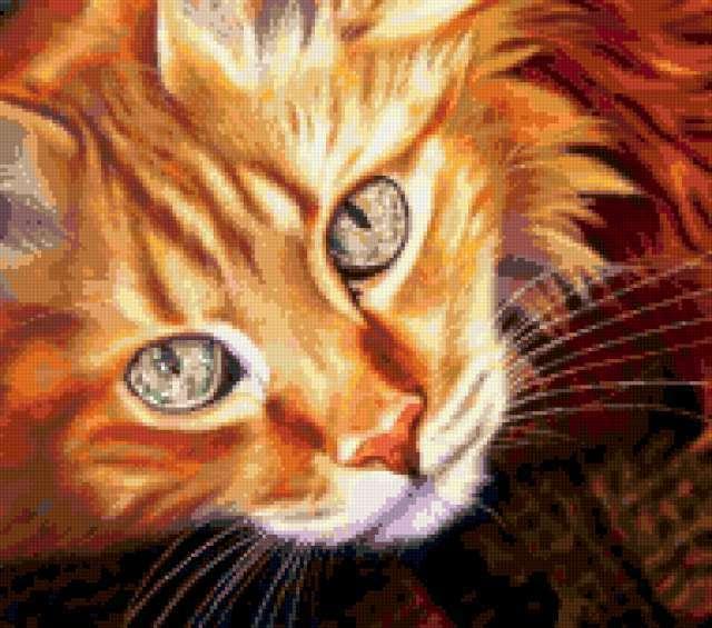 Портрет рыжего кота
