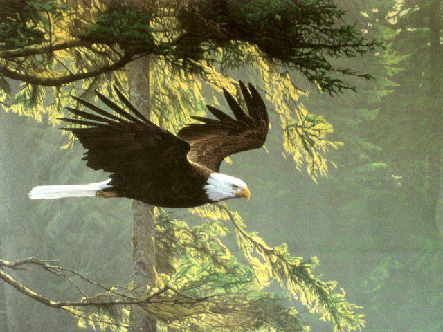 Орел в полете, оригинал