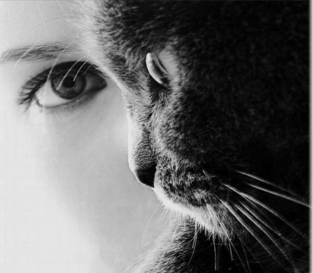 Женщина кошка вышивка
