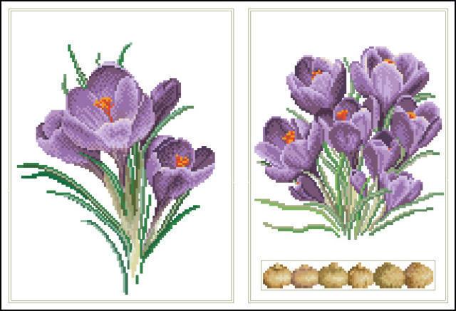луковицы, весенние цветы,