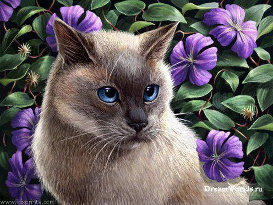 Сиамский кот и клематис,