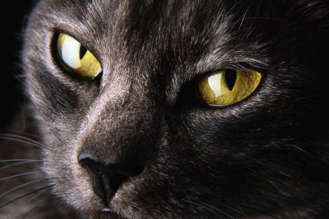 Глаза кошки,