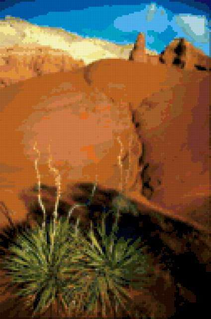 Агава в пустыне, предпросмотр