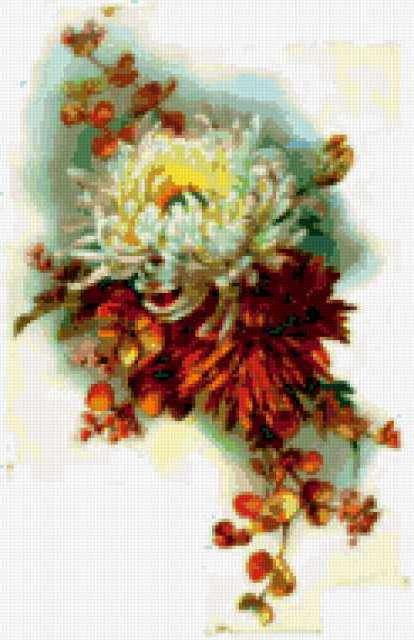 Хризантема, предпросмотр