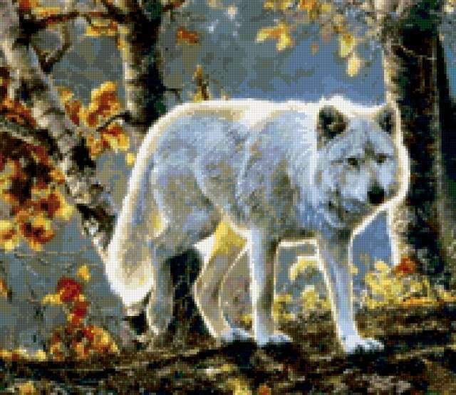 Белый волк в осеннем лесу,