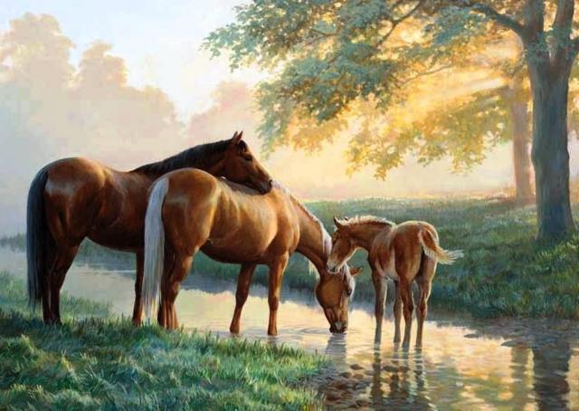 лошадь, конь, мустанг,