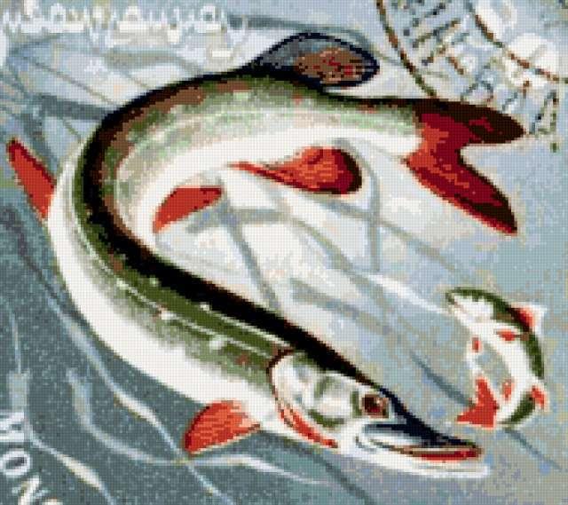 Охота щуки, рыба, рыбы, рыбка,