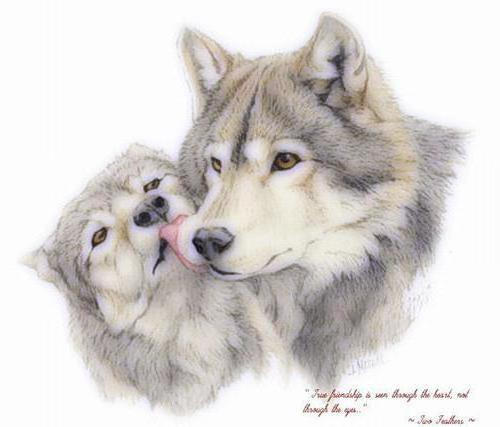 Волки, волки, волк, любовь,