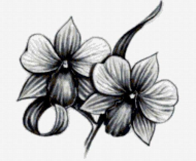 Цветы, цветы, графика