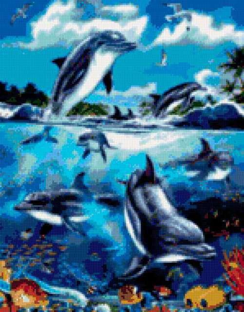 Дельфины, предпросмотр