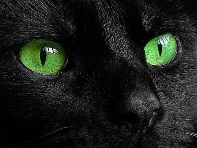 Чёрный кот, картина, пейзаж,