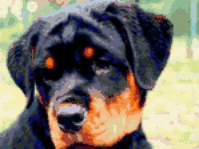 Ротвейлер , собаки