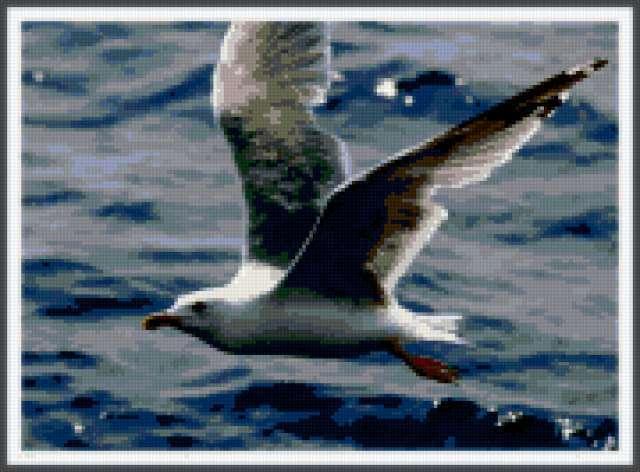 Чайка, чайка, птицы, море