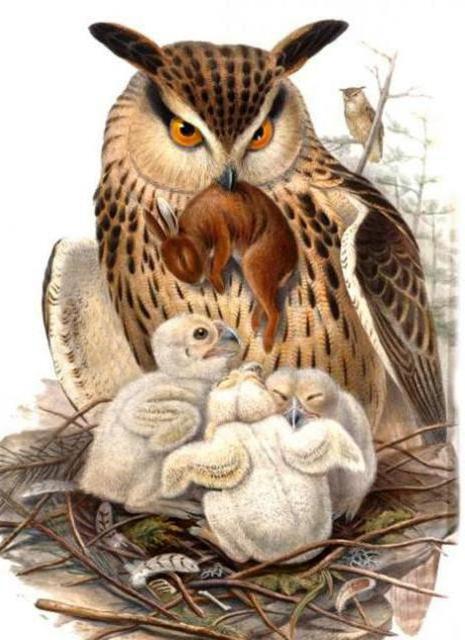природа, птицы, сова,