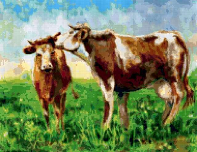 Коровы, предпросмотр