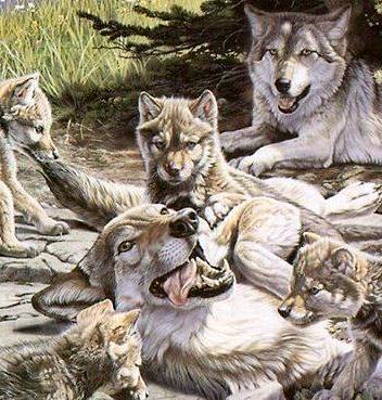 Волки, природа, животные