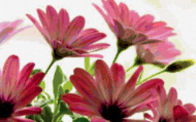 Розовые герберы, предпросмотр