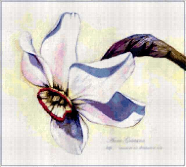 Нарцисс, предпросмотр