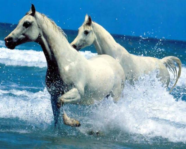 Белые лошади, оригинал