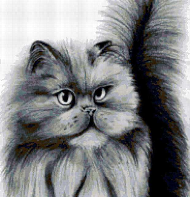 Персидский кот, предпросмотр