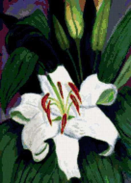Белый тюльпан, предпросмотр