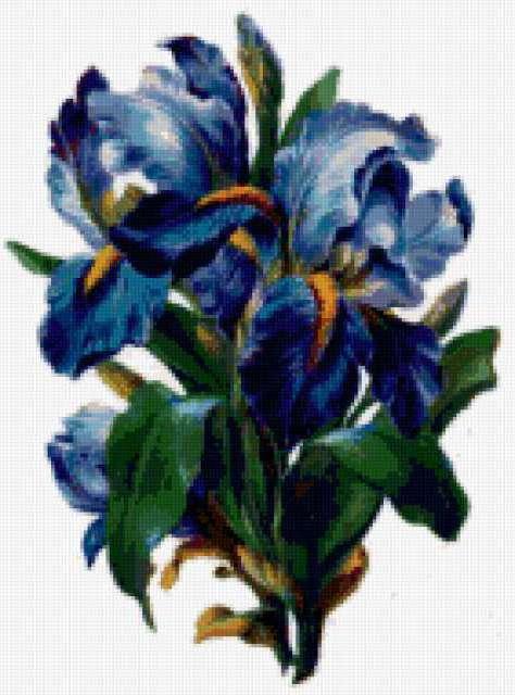 Цветы Ириды, ирисы, петушки,