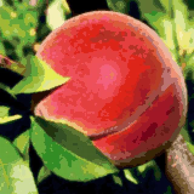 Персик на ветке, предпросмотр