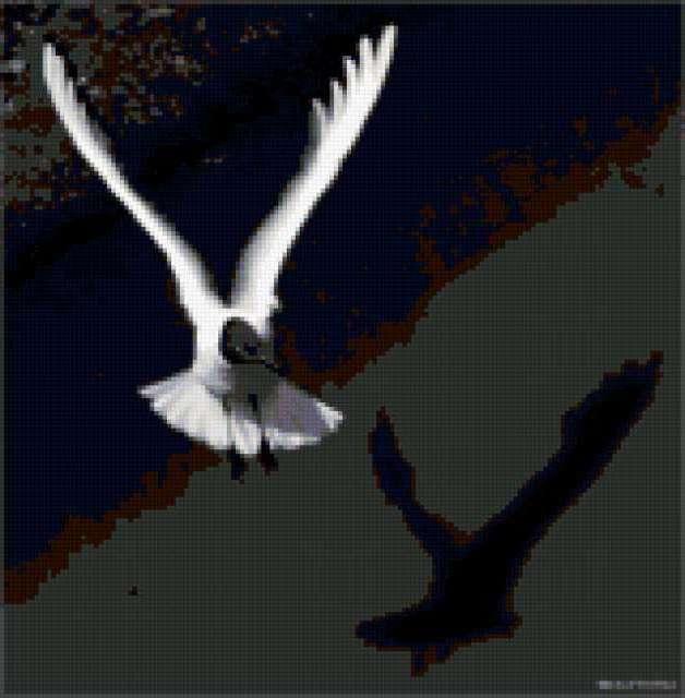 Летящая чайка, птицы