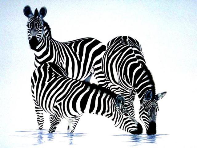 Зебры, картина, пейзаж