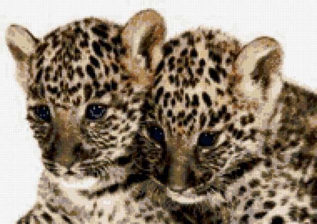 Маленькие леопарды
