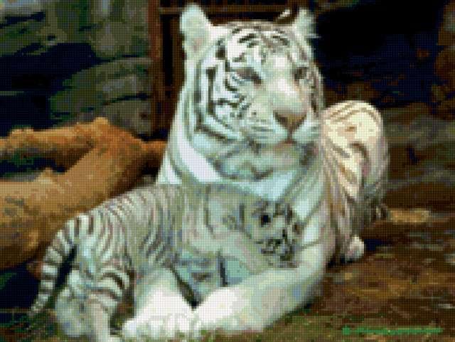 Белая тигрица, предпросмотр