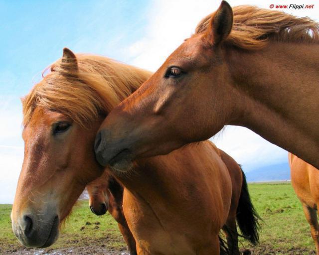 """Серия - """"Лошади"""", животные"""