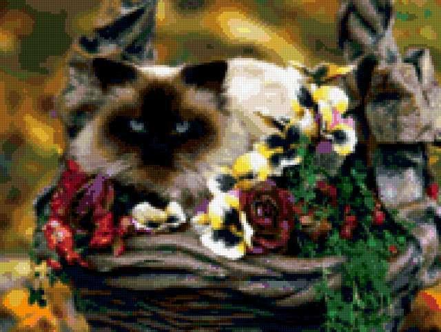 Сиамский кот,
