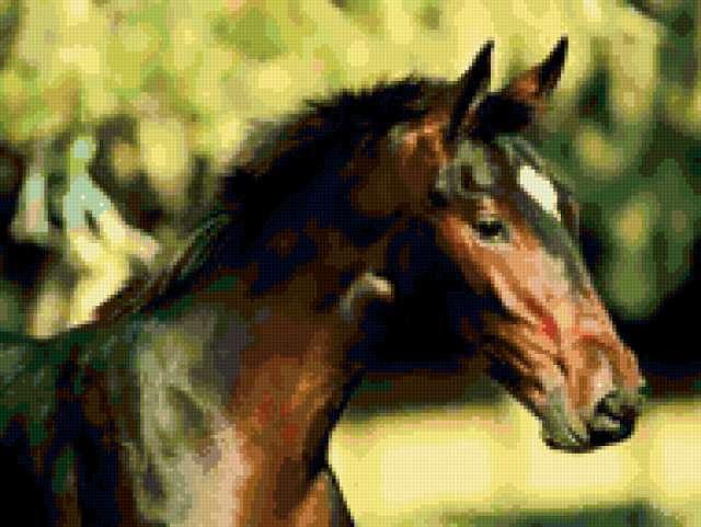 Звездочка, животные, лошадь