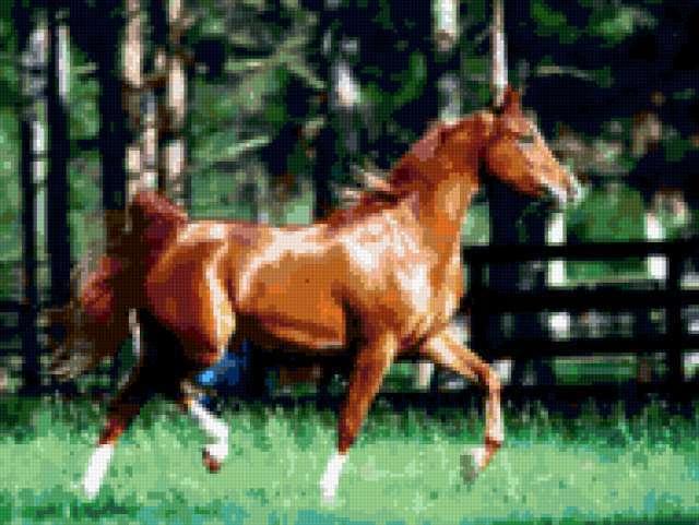 Бег рысцой, животные, лошадь,