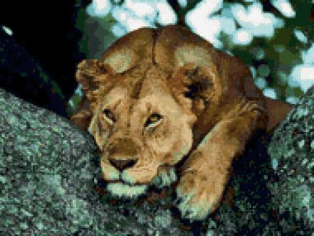 Уставшая львица, предпросмотр