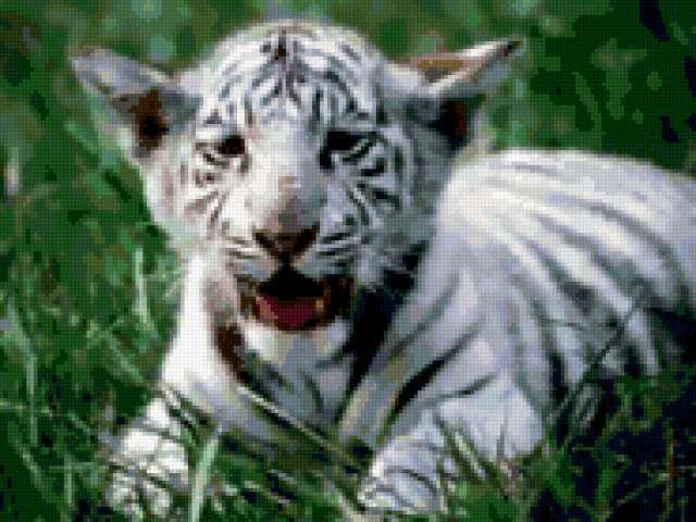 Барсик в траве, животные, тигр