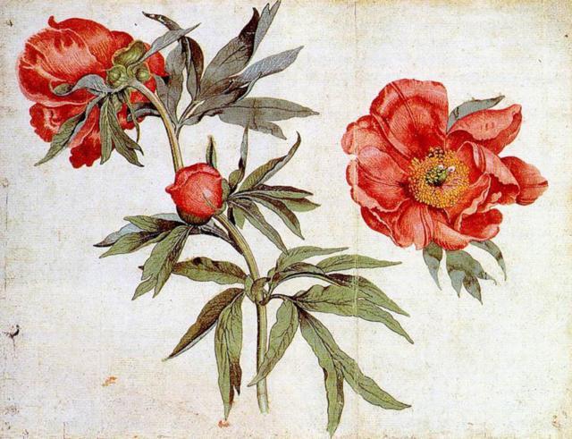 Шиповник-гербарий, цветы
