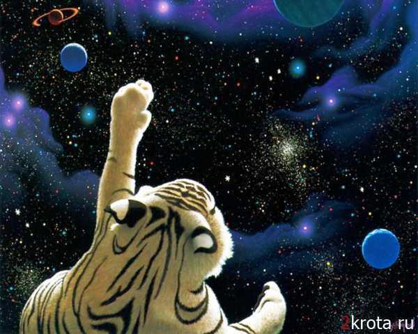 Космос, тигр, животные, звери,