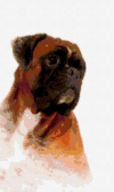 Вышивка крестом боксер собака