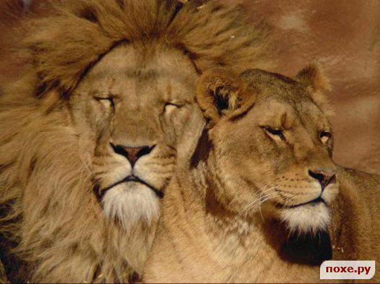 Пара, животные, кошки, любовь