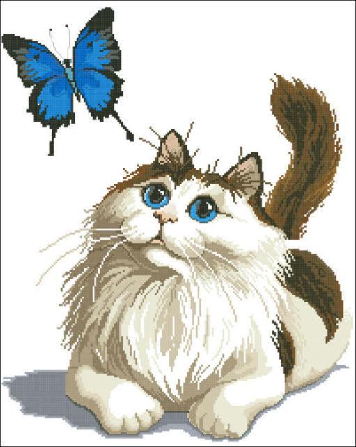 Синие глаза и бабочка, кошки,