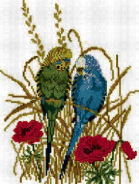 Волнистые попугайчики, птицы