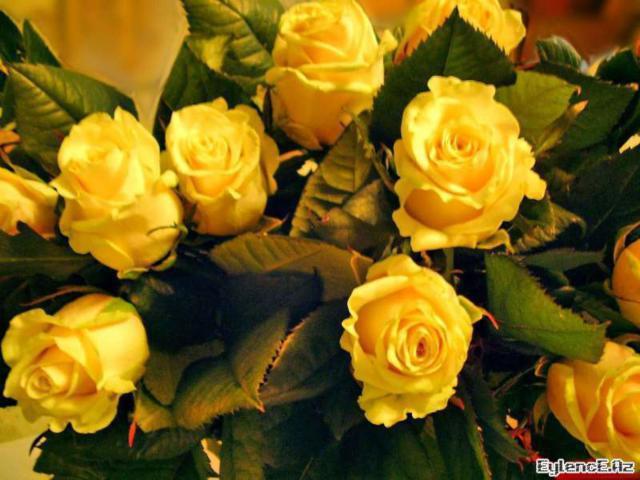 Букет желтых роз, букет цветов